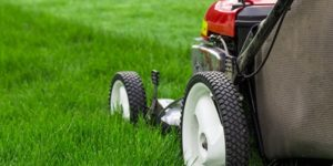 Mowing New Grass